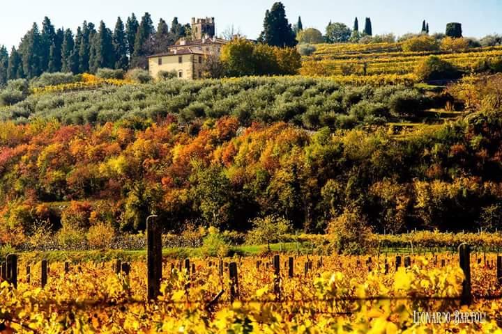 Wine tour in Valpolicella